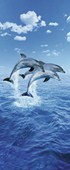 Perfect Synchronicity Three Dolphins