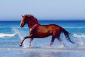 Cantering in the Surf Beautiful Horse