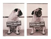 Pugsy Malone Jim Dratfield