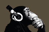 Stereo The Chimp