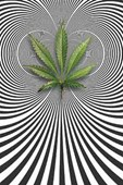 Cannabis Optical Illusion Kurt Ananda