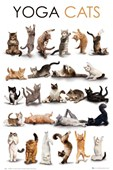 Flexible Felines Yoga Cats