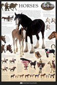 Horses Dorling Kindersley