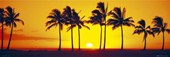 Silhouetted Palm Trees Hawaiian Sunset