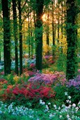A Feast of Colour Flowers in the Forest