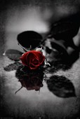 Blood Red Petals Gothic Rose