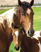 Mare and Foal Horse Photography