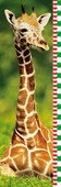 Baby Giraffe Height Chart Growing Up Chart by George D Lepp